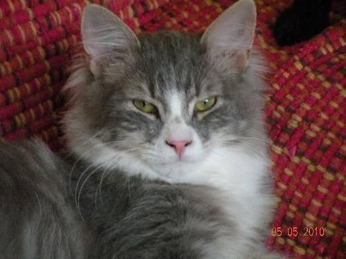Nicholas kitten